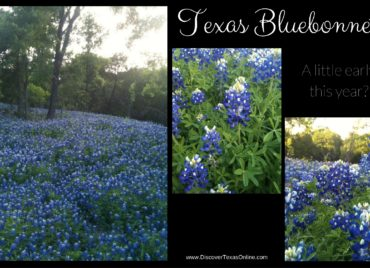 Be on the Lookout for Early Bluebonnets!