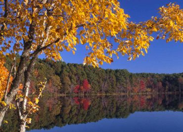 Get Out and Enjoy Fall Foliage!
